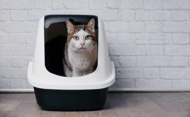 gesloten kattenbak met kap