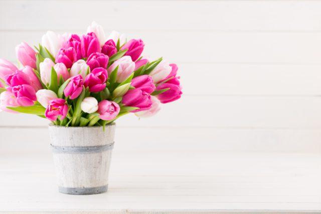 tulpen verzorgen