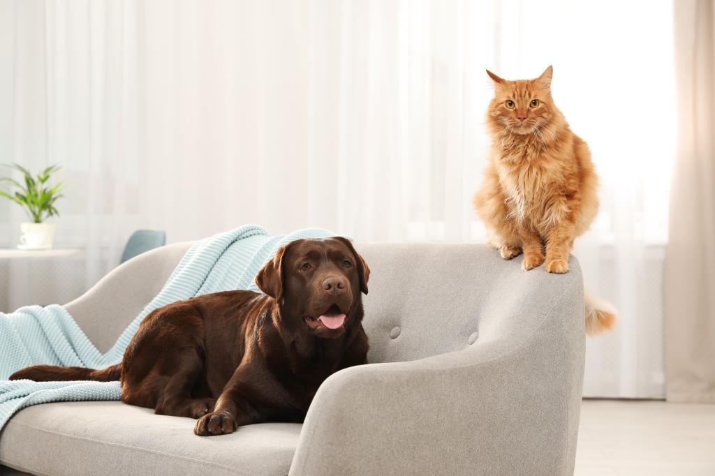huis inrichten huisdier