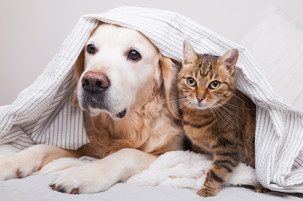 woning huisdiervriendelijk