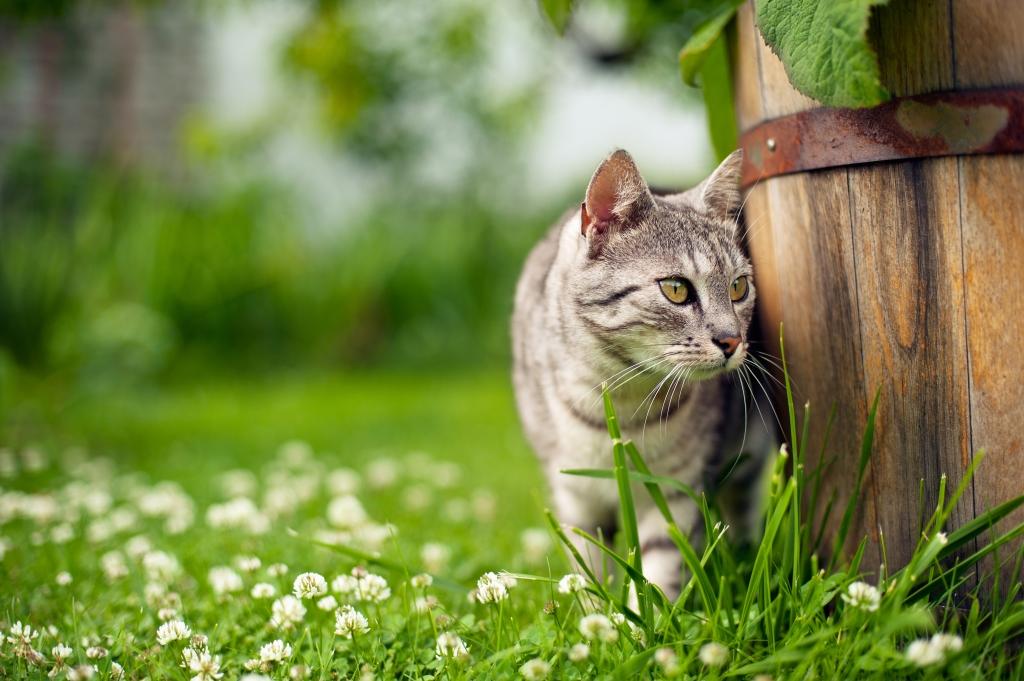 katvriendelijke tuin