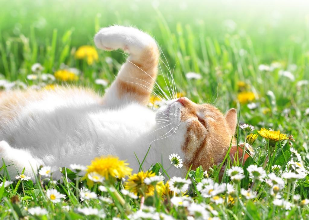 tuin katvriendelijk maken
