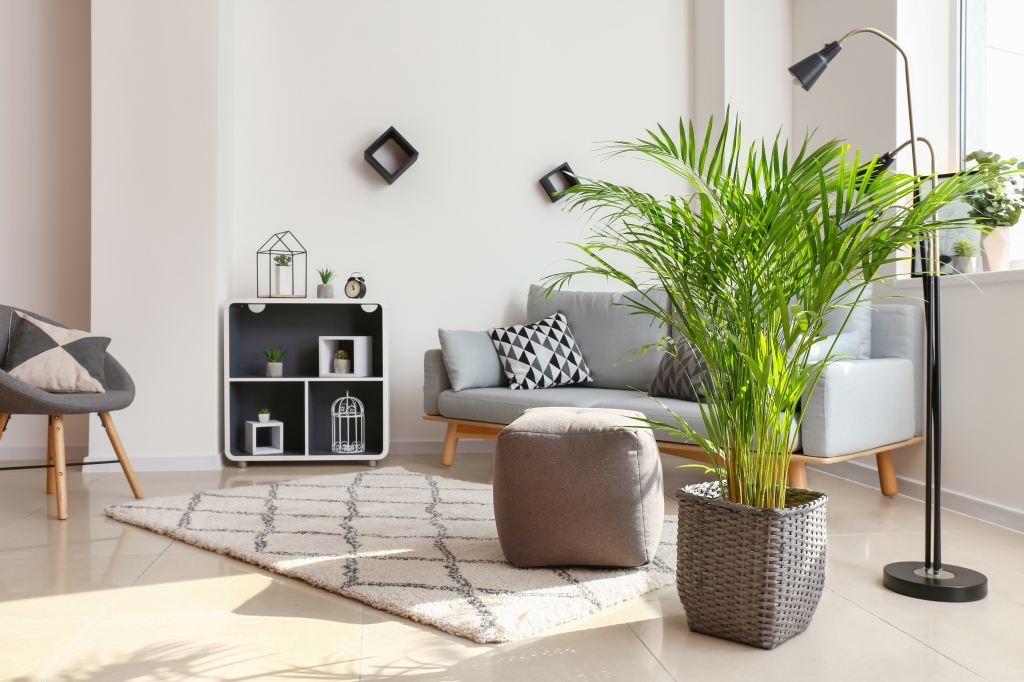 beste luchtzuiverende planten