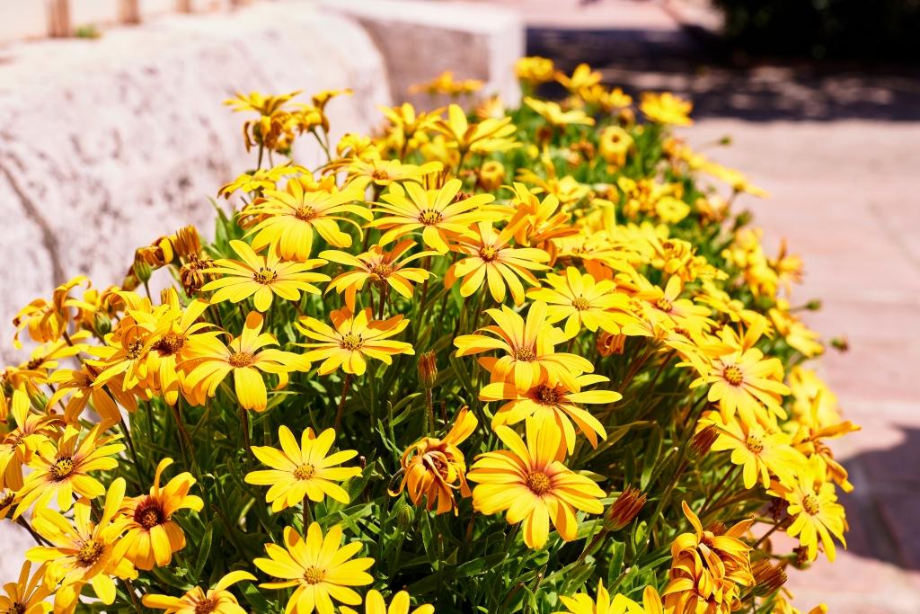 bloemen in de zomer