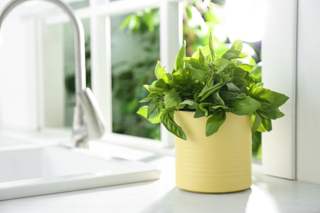 kruiden kweken in huis