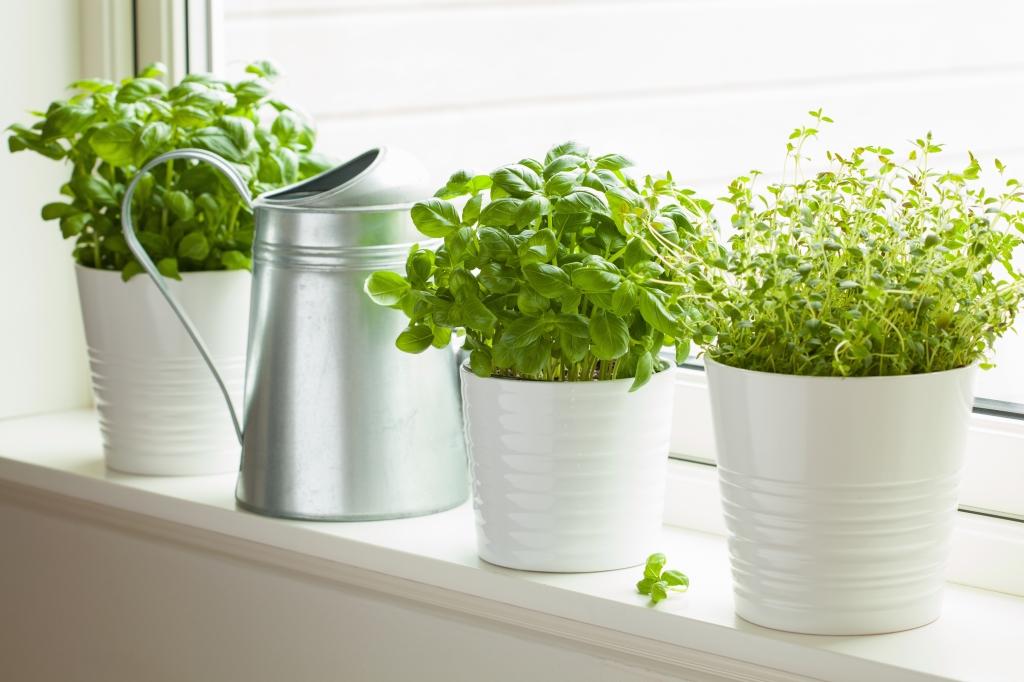 kruiden thuis kweken