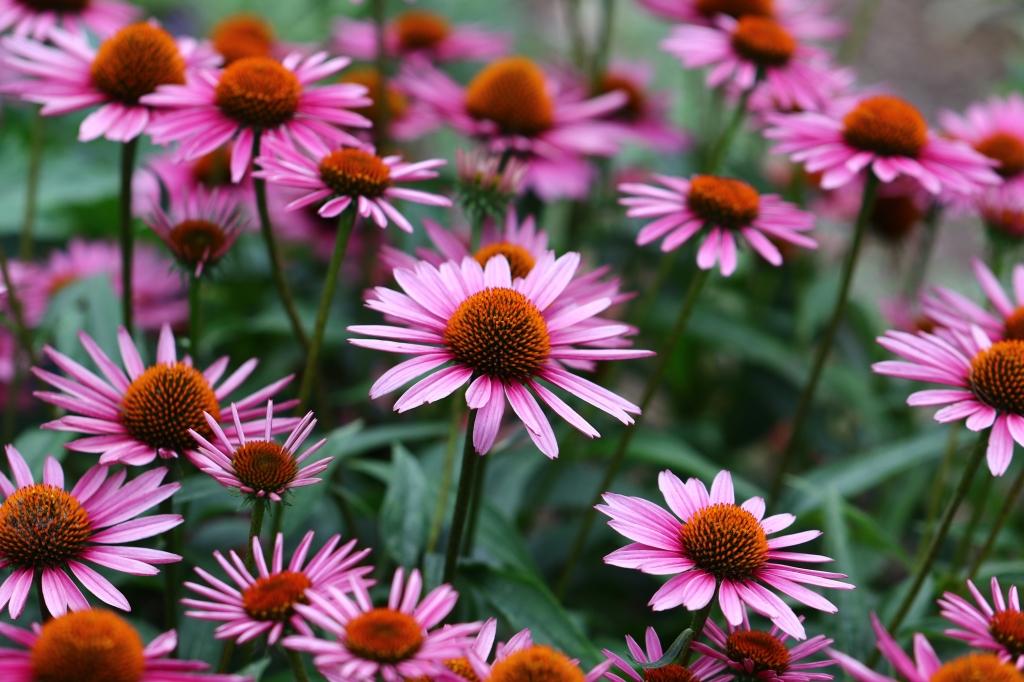 zomerbloeiers voor bloembakken