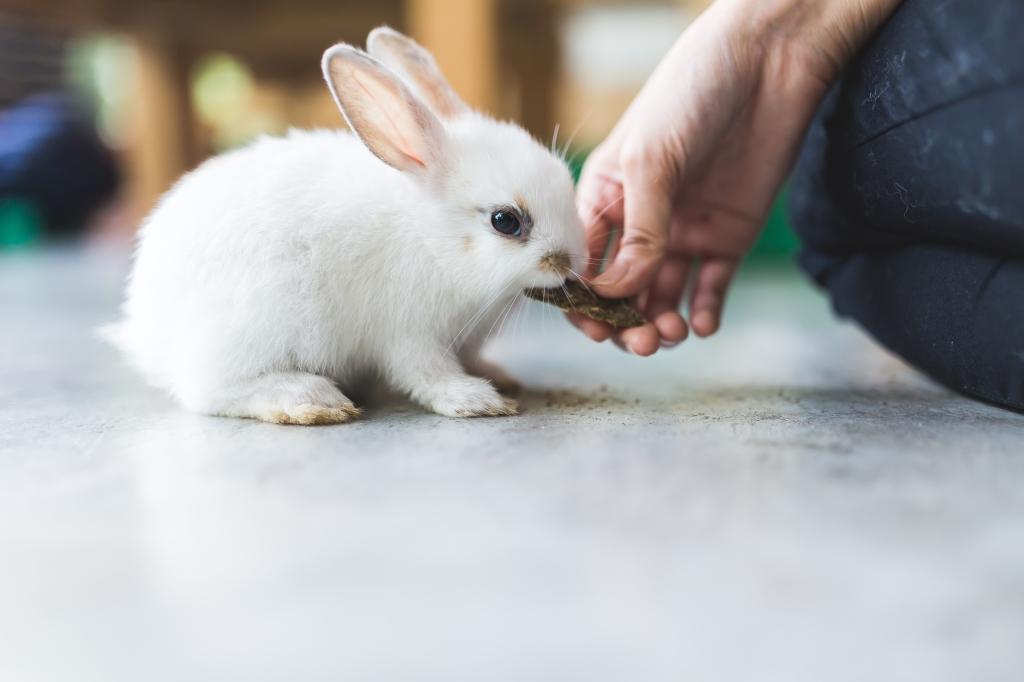 huisdier konijn