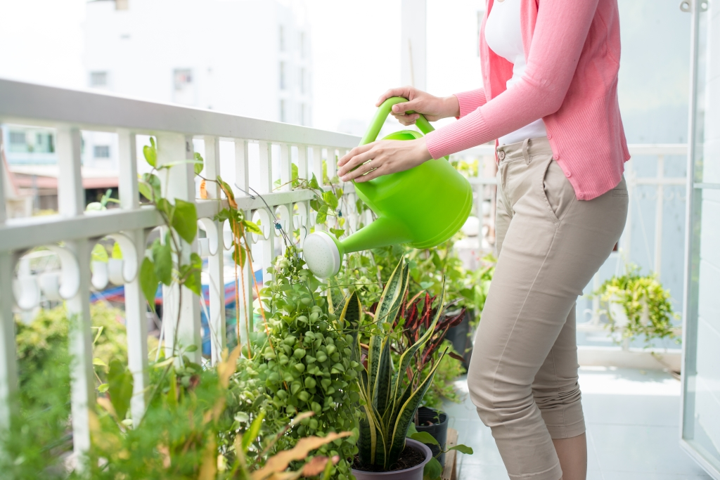 kamerplanten buiten zetten