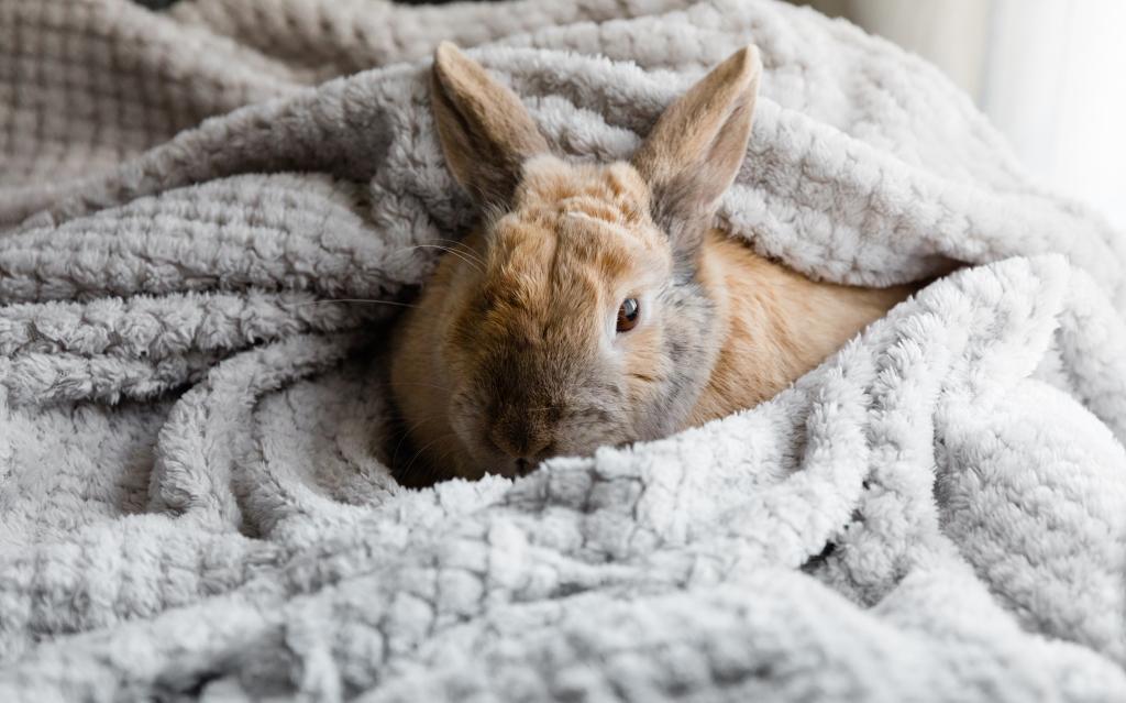 konijn huisdier