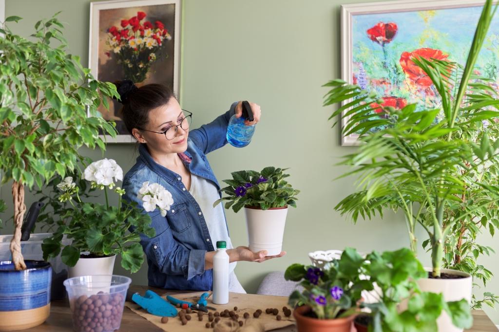 wanneer kamerplanten voeding geven