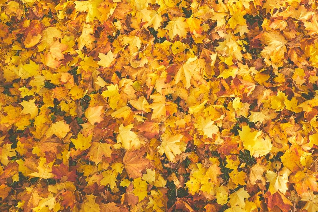 bladeren laten liggen