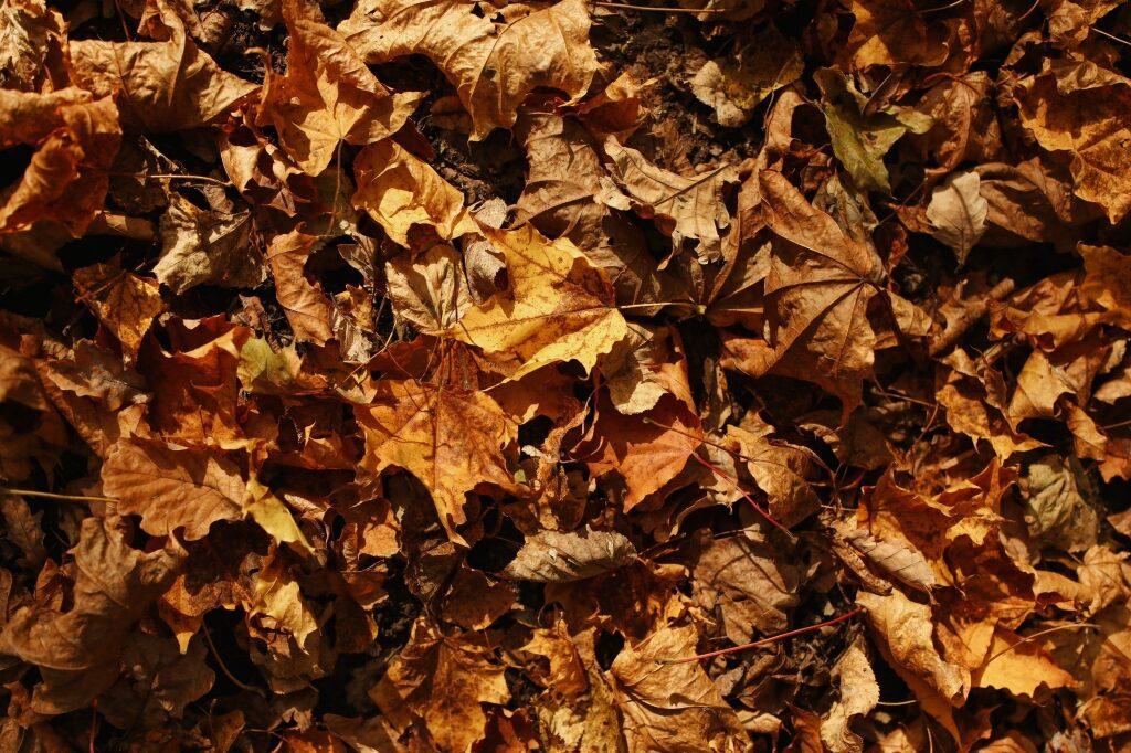 herfstbladeren drogen